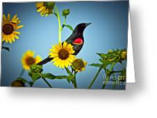 Redwing In Sunflowers Greeting Card