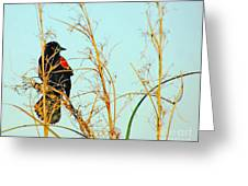 Redwing Lacassine  Greeting Card