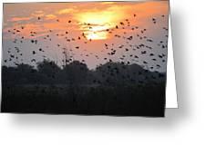 Redwing Sunset Greeting Card