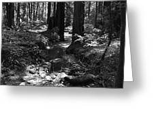Redwood Creek Greeting Card