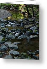 Redwood Creek Greeting Card