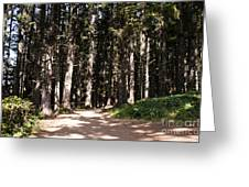 Redwood Forest  Greeting Card