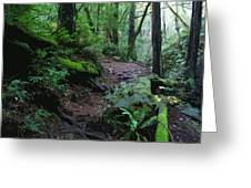 Redwood Forest Scene 1 Greeting Card