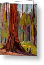 Redwood Giant Greeting Card