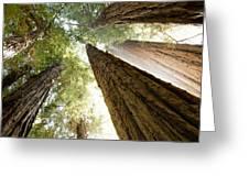Redwood Heaven Greeting Card