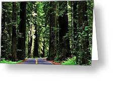 Redwood Highway Greeting Card