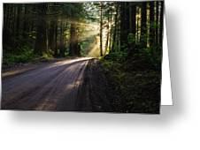 Redwood Magic Greeting Card