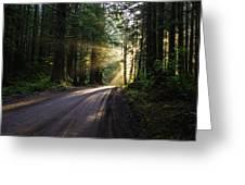 Redwood National Park Morning Greeting Card