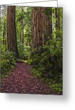 Redwood Path Greeting Card