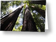 Redwood Reach Greeting Card