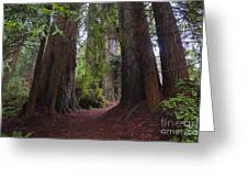 Redwood Greeting Card