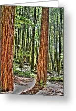 Redwoods 2 Big Basin Greeting Card
