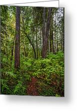 Redwoods 2 Greeting Card