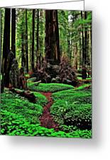 Redwoods Wonderland Greeting Card by Benjamin Yeager