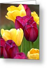 Redyellowtulips6728 Greeting Card