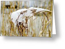 Reed With Snow Greeting Card
