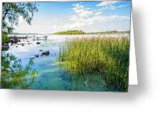 Reeds And Dnieper River Greeting Card