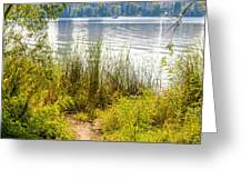 Reeds And Plants Close To The Shore Greeting Card
