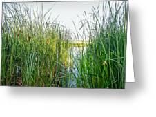 Reeds And River Greeting Card