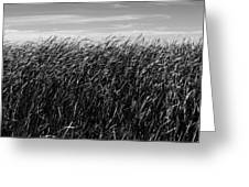 Reeds And Sky Greeting Card