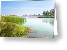 Reeds Close To The Shore Greeting Card