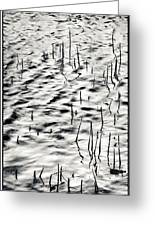 Reeds In Ripples Greeting Card