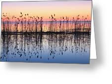 Reeds Reflected In Water At Dusk Ile Greeting Card