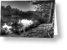 Reedy Creek Park Greeting Card