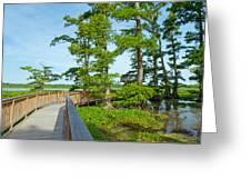 Reelfoot Lake Greeting Card