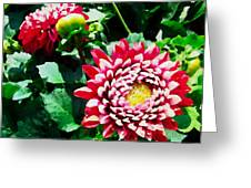 Ref Dahlias Greeting Card