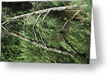 Reflected Branch Greeting Card