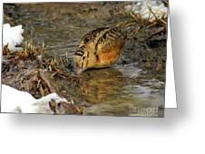 Reflected Eye Woodcock Greeting Card