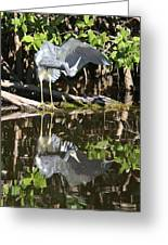 Reflected Great Blue Heron Greeting Card