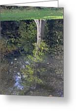 Reflected Tree Greeting Card