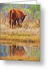 Reflecting Foal Greeting Card