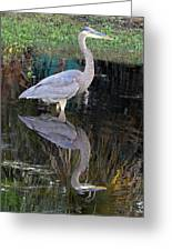 Reflecting Great Blue Heron Greeting Card
