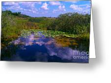 Reflecting In The Glades Greeting Card