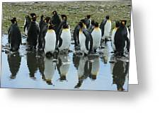 Reflecting King Penguins Greeting Card
