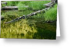 Reflecting Pond Glacier National Park Painted Greeting Card