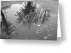 Reflection 002 Greeting Card