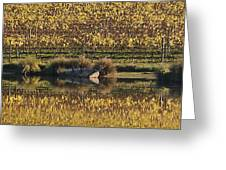 Reflection-country-victoria  Greeting Card