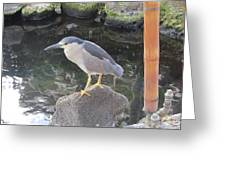 Reflection Of A Black-crowned Night Heron Greeting Card