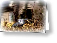 Reflection Of A Heron Greeting Card