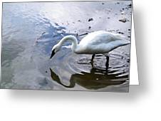 Reflection Of A Lone White Swan Greeting Card