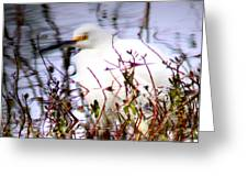 Reflection Of A Snowy Egret Greeting Card