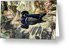 Reflection Of A Wood Duck Greeting Card