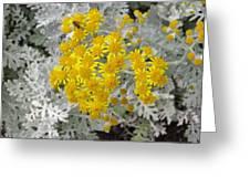 Reflection Of Sun Greeting Card