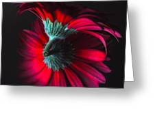 Reflection Of The Gerbera Greeting Card
