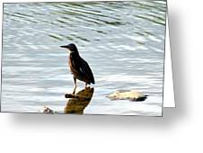 Reflection Of The Green Heron Greeting Card
