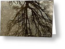 Reflection. Tree. Greeting Card